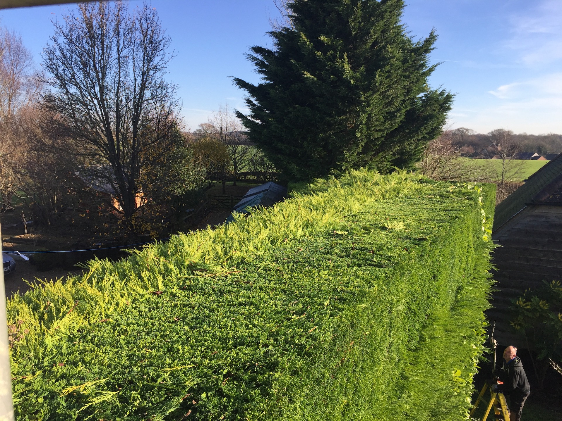hedge cutting rowlands castle