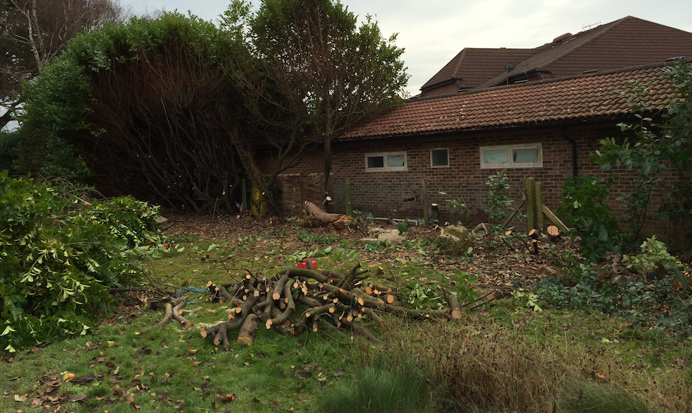 hedge removal rowlands castle